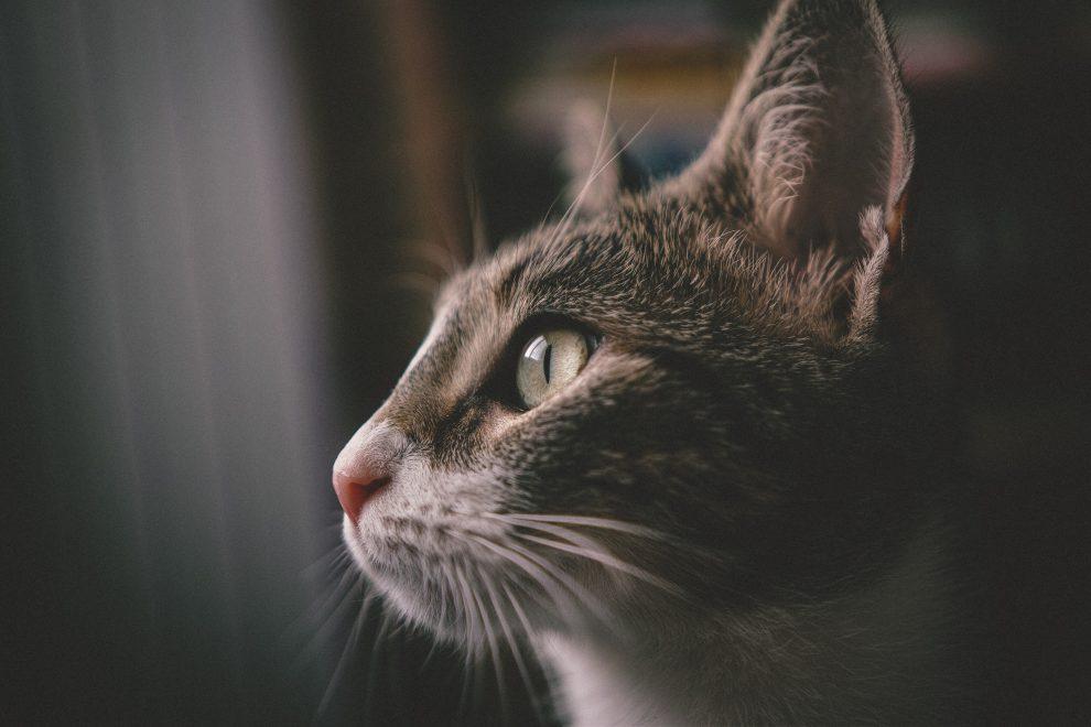 typhus chat